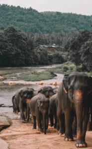 Billig biluthyrning & hyrbil i Sri Lanka