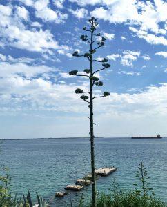 Biluthyrning & hyrbil i Taranto