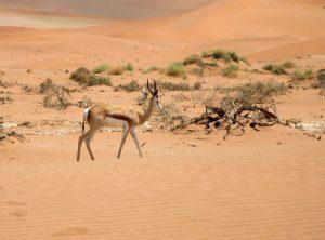 Hitta hyrbil & hyra bil i Namibia