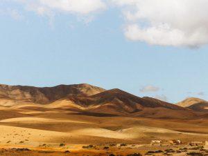 Hyrbil & biluthyrning Fuerteventura flygplats